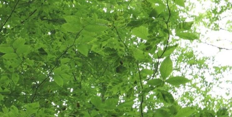 بیماری اسرارآمیز درختان آمریکا