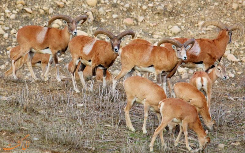 معرفی مناطق شکار ممنوع ایران