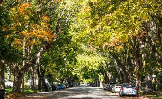 فواید شگفت انگیز زندگی در کنار درختان