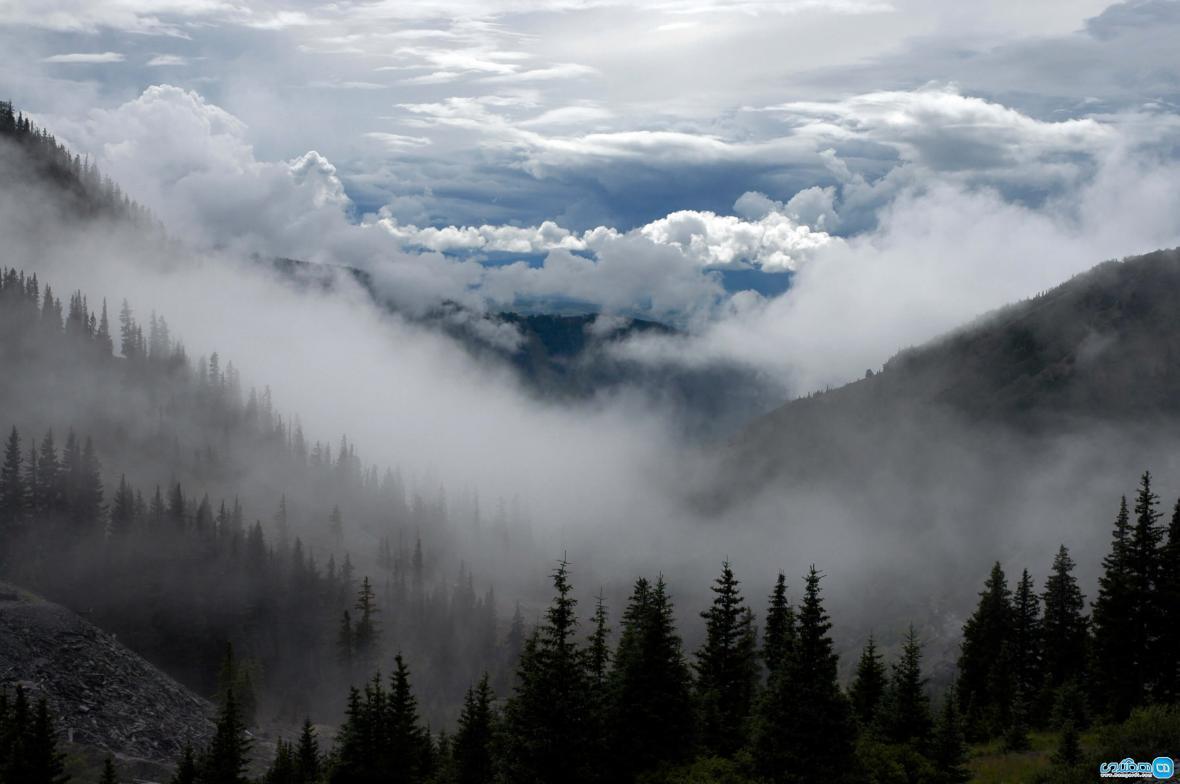جنگل ابر، جنگلی در میان ابرها