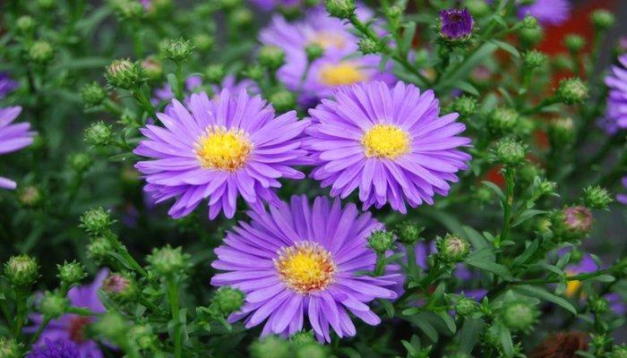 بهترین گل برای عیادت بیمار چیست؟
