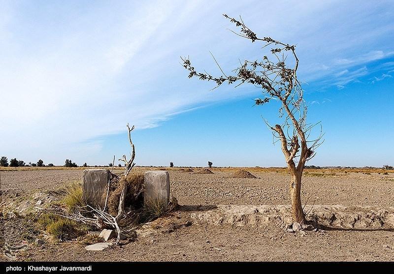 یک بام و دو هوای جنگلکاری در تالاب هامون، هشدار پدر کویر شناسی ایران نسبت به یک اقدام عجیب محیط زیستی در سیستان
