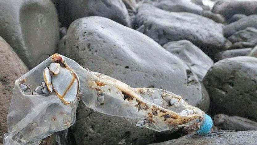 جزیره ای که وسعت آلودگی پلاستیکی در دریاها را نشان می دهد
