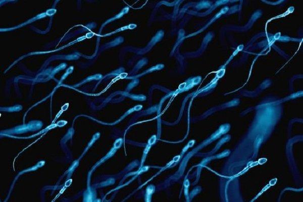 کشف ماده ای طبیعی که کیفیت اسپرم را بهبود می بخشد