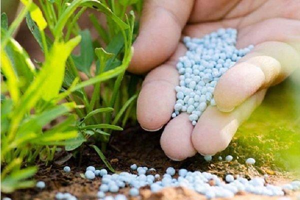 کود کشاورزی فعلا گران نمی شود، افزایش 23 درصدی مصرف
