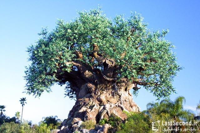 درخت زندگی در قلمرو حیوانات