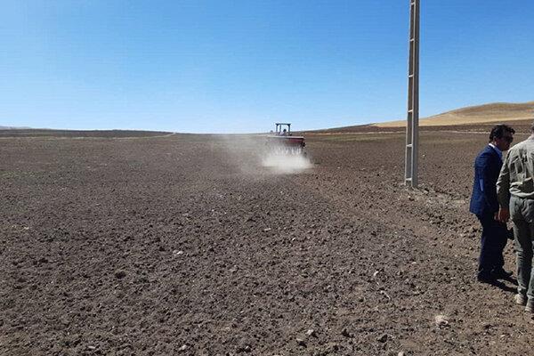 72 هزار هکتار از اراضی بوکان به کشت گندم اختصاص یافت