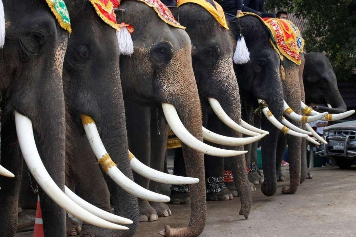 ضیافتی که در آن فیل ها مهمان افتخاری هستند