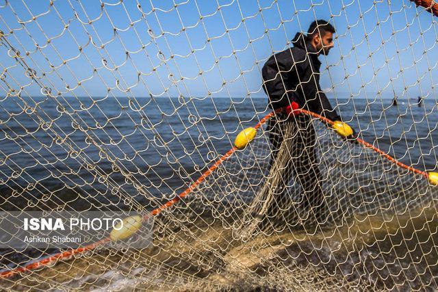 برای هیچ کشتی ترال چینی مجوز صید در آب های عمان صادر نشده است