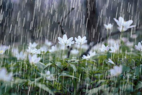 پیش بینی بارش برف و باران در ارتفاعات قزوین