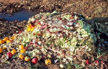 تامین غذای 9 میلیون نفر با جلوگیری از دورریز میوه ها، ایران رتبه نخست ضایعات محصولات کشاورزی در دنیا!