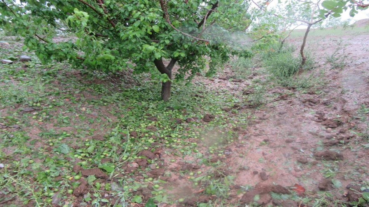 خسارت 76 میلیارد تومانی بارندگی و سیل به بخش کشاورزی
