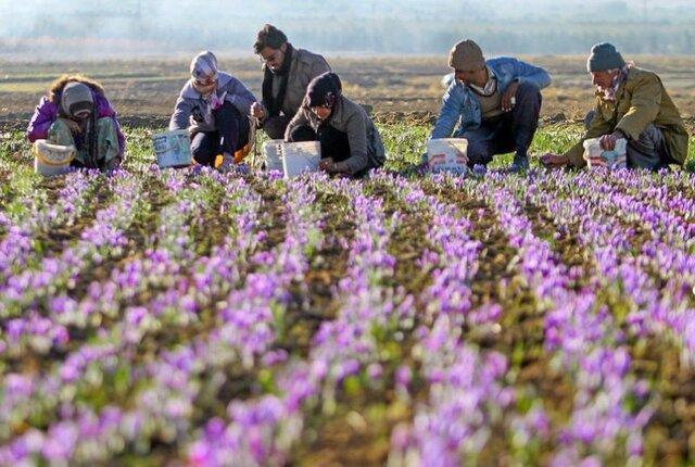 سهم ناچیز ایران از بازار گیاهان دارویی در دنیا