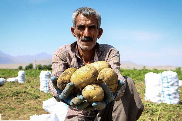 کشاورزی گلستان رها شده است ، هیچ برنامه و سیاستی برای کشت نداریم