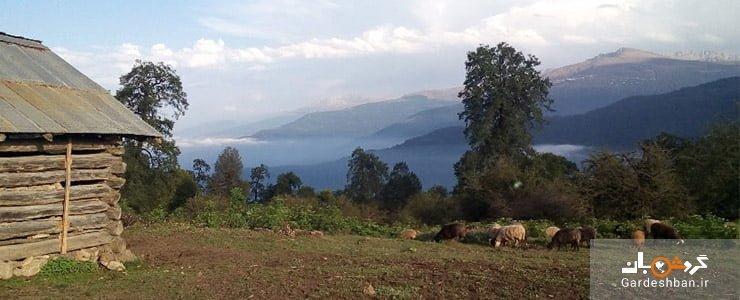 جنگل های چاخانی در روستای زیبای گت کلای آمل، عکس
