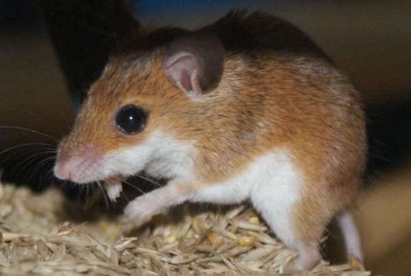 بازیابی بینایی در موش های نابینا با تزریق نانو