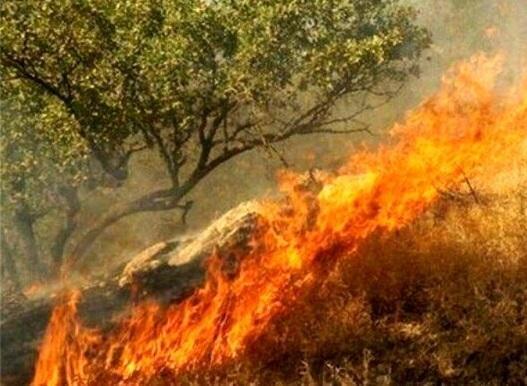 آتش سوزی در جنگل لویزان تهران اطفاء شد