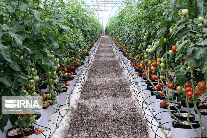 خبرنگاران 15 پروژه کشاورزی ساوجبلاغ بهره برداری شد