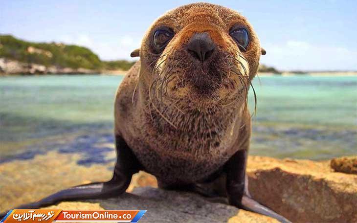 دیدن این حیوانات بانمک روزتان را می سازد!، تصاویر