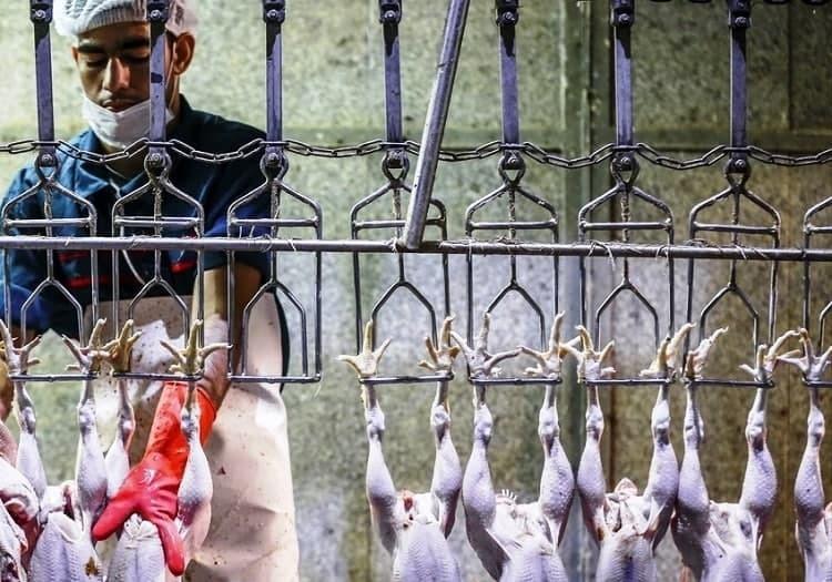 مرغ دولتی 18هزار و 500تومانی را از کجا بخریم؟