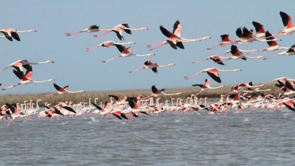 پایش 25 هزار بال پرنده مهاجر در بهشت پرندگان ایران