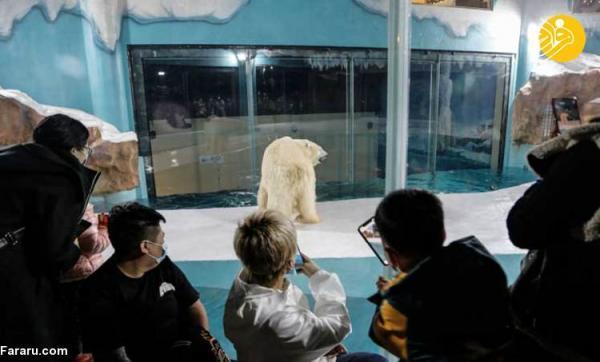 (تصاویر) در این هتل با خرس های قطبی زندگی کنید!