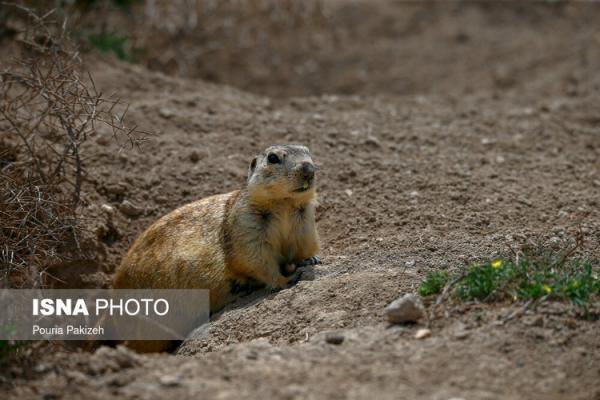 (تصاویر) سنجاب زمینی
