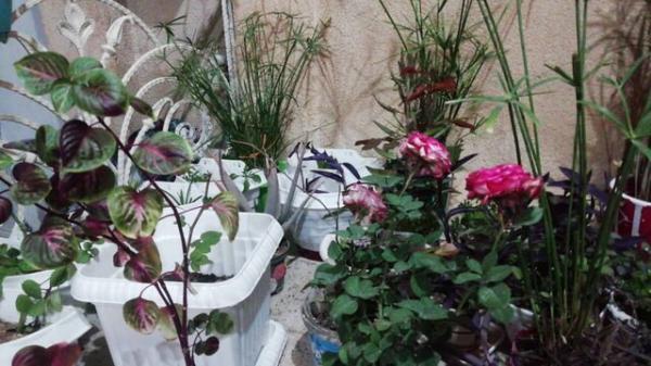 مطالعه و پرورش گل، دل مشغولی های یک استاد دانشگاه در روزهای کرونازده