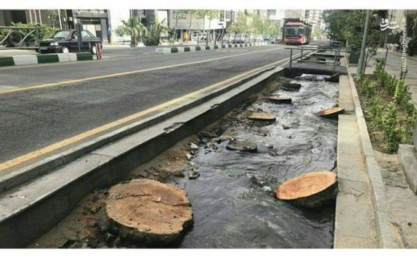 تبدیل خیابان ولیعصر به پیاده راه برای حفظ درختان آن