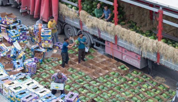 مزارع هندوانه چراگاه دام شد، کرایه حمل بیشتر از قیمت هندوانه!