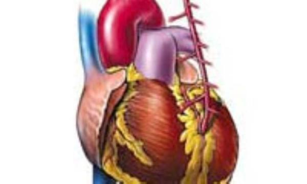 راز داشتن یک قلب سالم